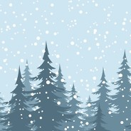 pine trees in the winter with snow