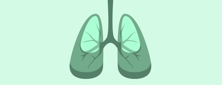 Respiratory 101: The Respiratory Tract.